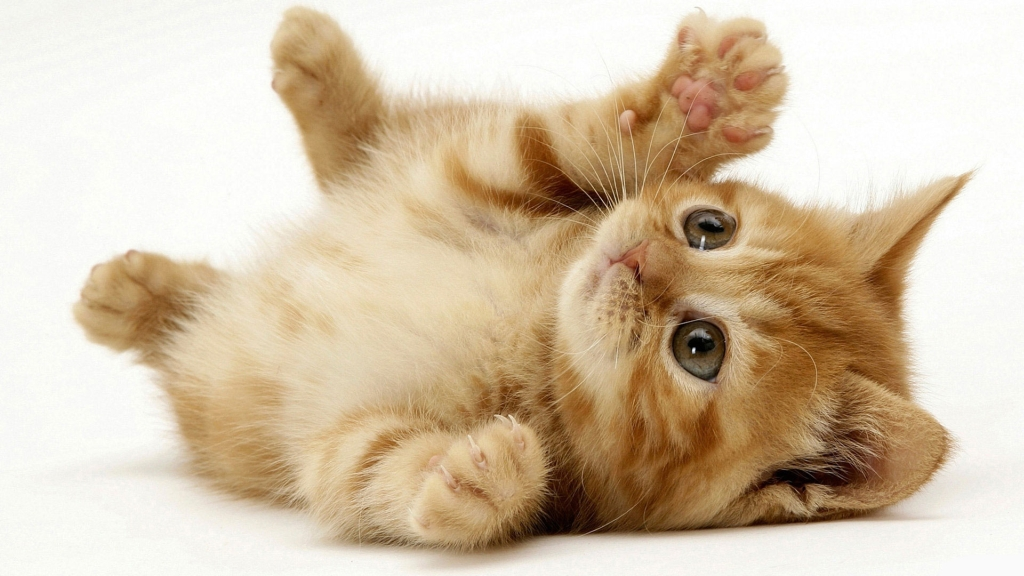Imagini pentru pisica