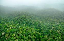 Ikea a cumpărat în România 33.600 de hectare de pădure