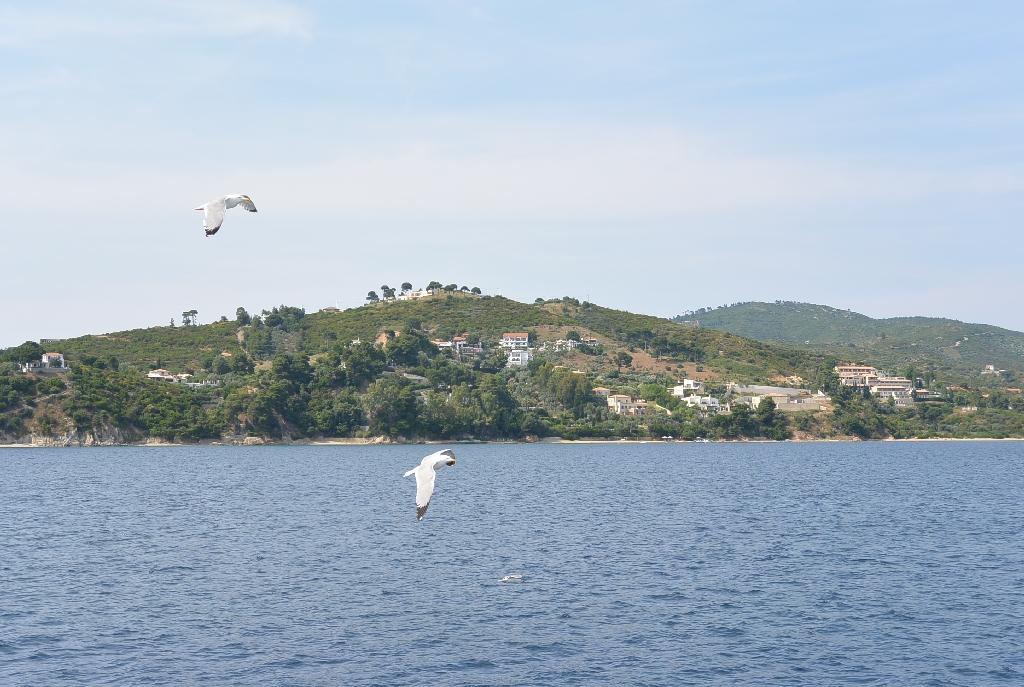 Pescarusi in zbor la Marea Egee - vedere catre insula Skiathos