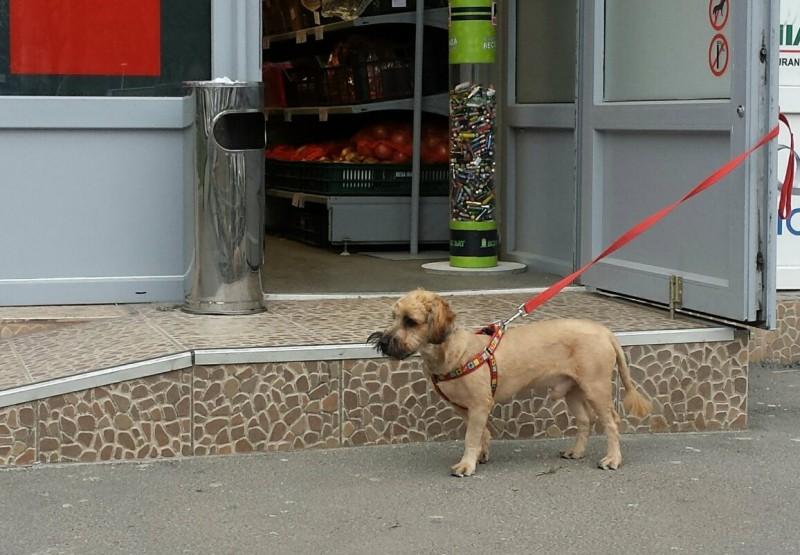dogsatsupermarket 2