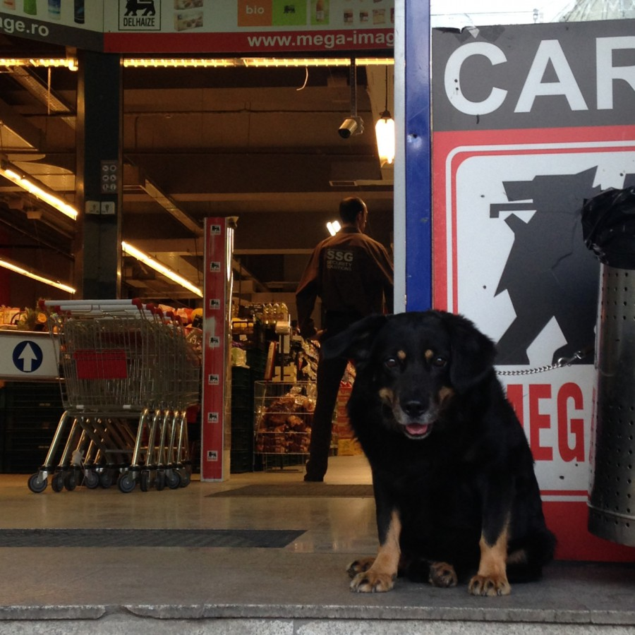 dogsatsupermarket 4
