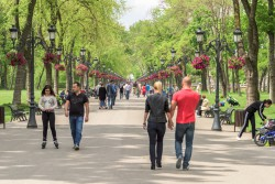 Primăriile de sector din capitală au tăiat legal arborii, a constatat Garda de Mediu după scandalul de pe șoseaua Kiseleff