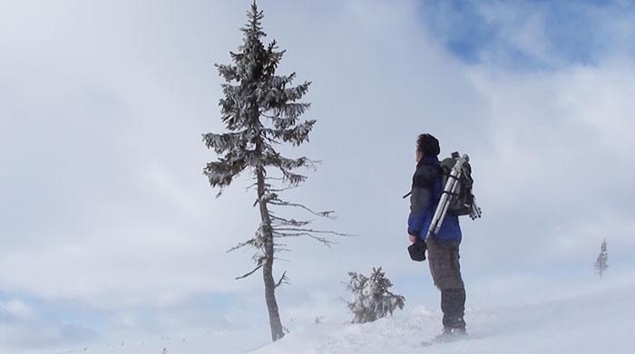 cel mai batran copac din lume sueda