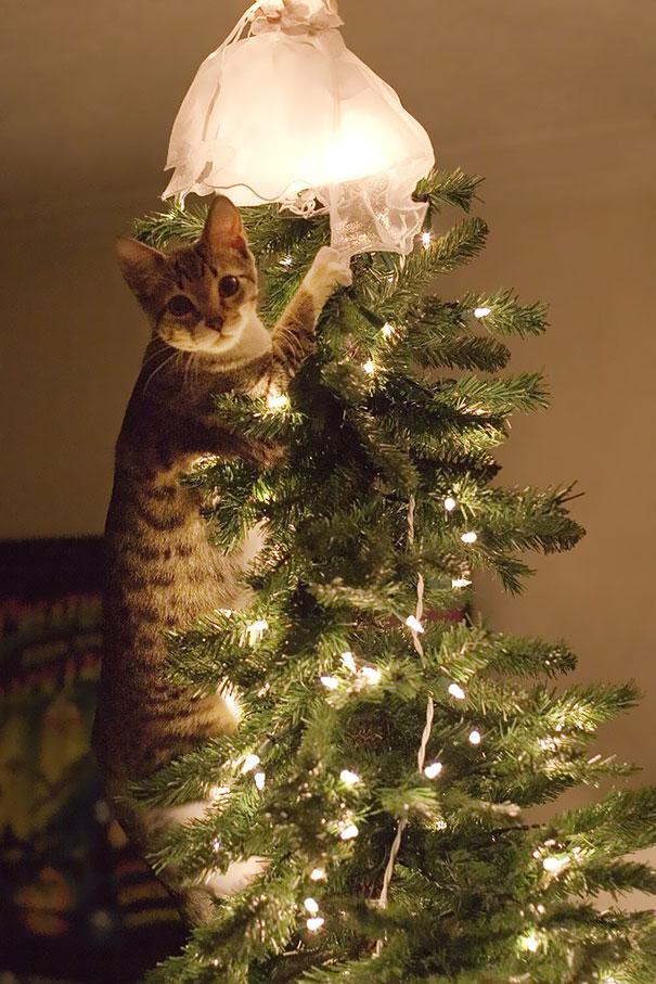 pisica de craciun (1)