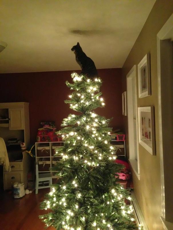 pisica de craciun (2)