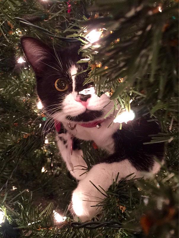 pisica de craciun (4)