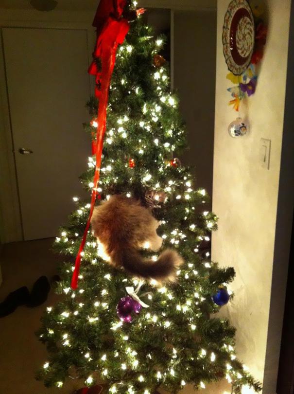 pisica de craciun (5)