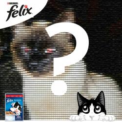 Top 5 povești interesante ale pisicilor care o concurează pe DJ PISI – GALERIE FOTO