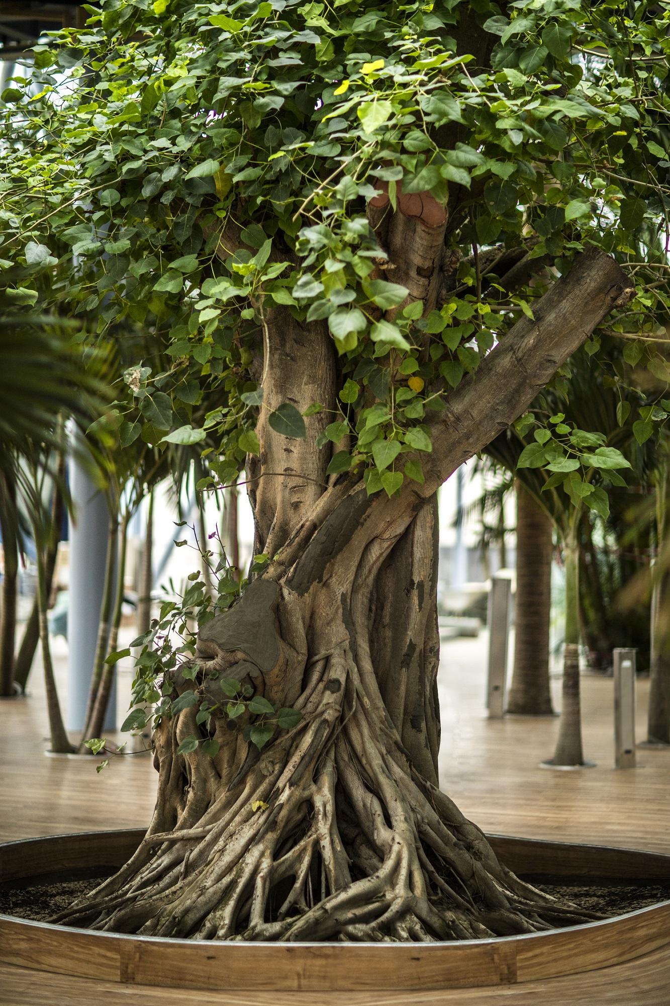 Pomul Vietii la Therme Bucuresti