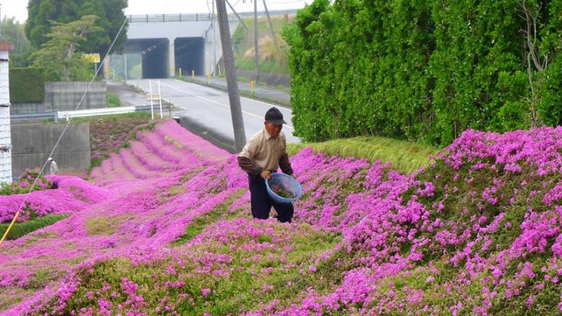 Kuroki planteaza mii de flori pt sotia oarba (4)