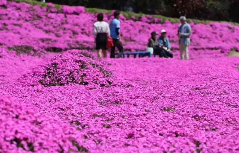 Kuroki planteaza mii de flori pt sotia oarba (8)