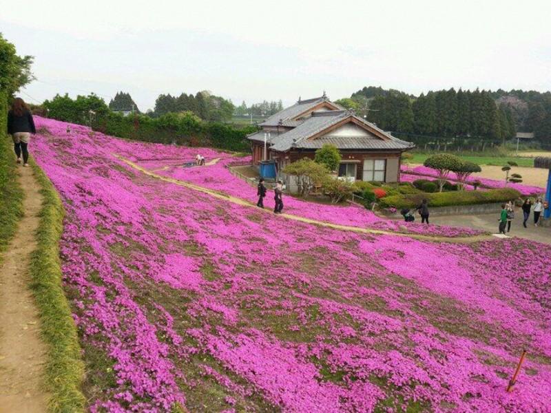Kuroki planteaza mii de flori pt sotia oarba (9)