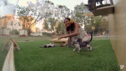 Spaţiu anti-stres cu pisici (VIDEO)