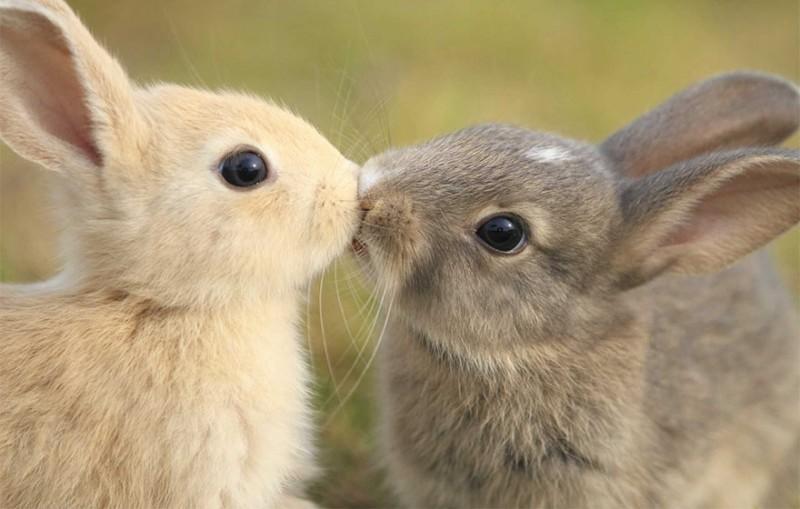 sarutul animalelor (2)