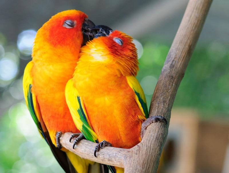 sarutul animalelor (8)