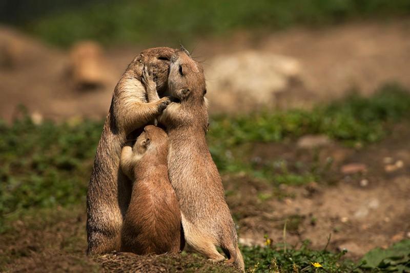 sarutul animalelor (9)