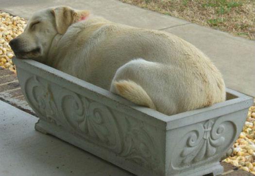 cum dorm cainii (6)