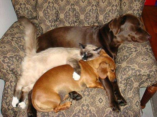 cum dorm cainii (7)