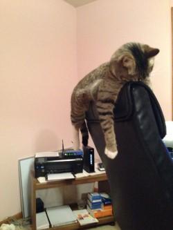20 de pisici în poziţii ciudate de somn – GALERIE FOTO