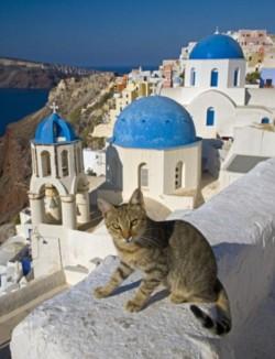 pisici grecia