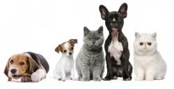 Cahne-fit: un gadget conceput pentru stăpânii de pisici și câini (VIDEO)
