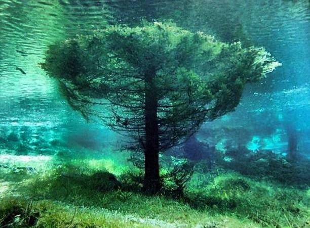 Gruner See (15)