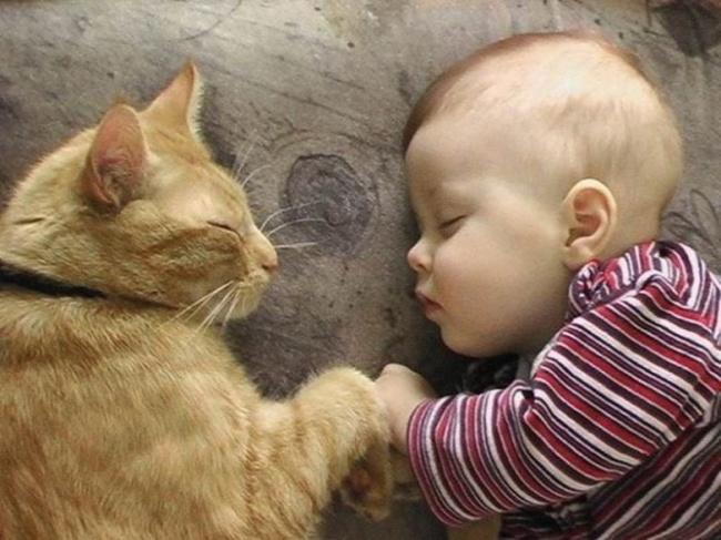 copiii si pisicile (10)