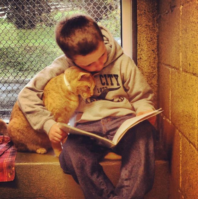 copiii si pisicile (2)