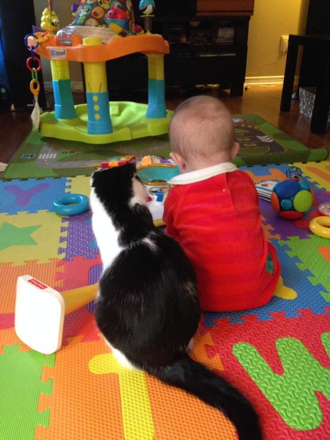 copiii si pisicile (5)