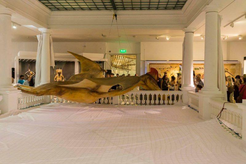 cel mai mare dinozaur zburător din lume (7)