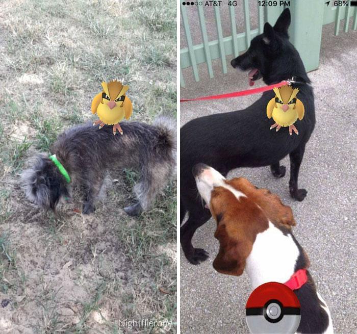 pokemon-go-caini (5)