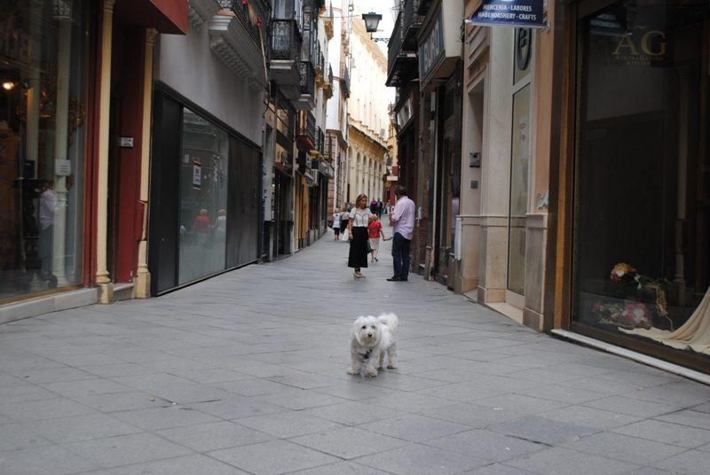 strazi Sevilla (1)