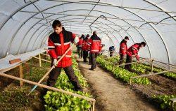 50 de tineri defavorizați vor fi sprijiniți pentru integrarea lor socio-profesională în întreprindere socială Concordia Agricultură