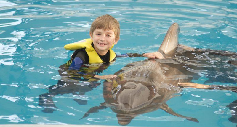 david-vorbeste-mai-mult dupa terapia cu delfini din Antalya