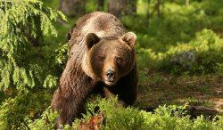Împuşcarea a 1.700 de animale sălbatice protejate: ministrul a suspendat ordinul