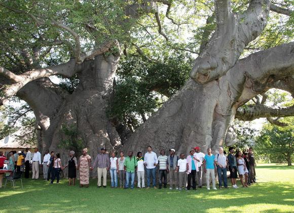 copaci faimosi (8)