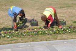 Primăriile din Bucureşti au plătit, în ultimii nouă ani, 800 de milioane de euro pentru amenajarea spaţiilor verzi (AUDIO)