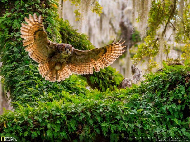 national-geographic-cei-mai-buni-fotografi-de-natura-ai-anului-2016-2