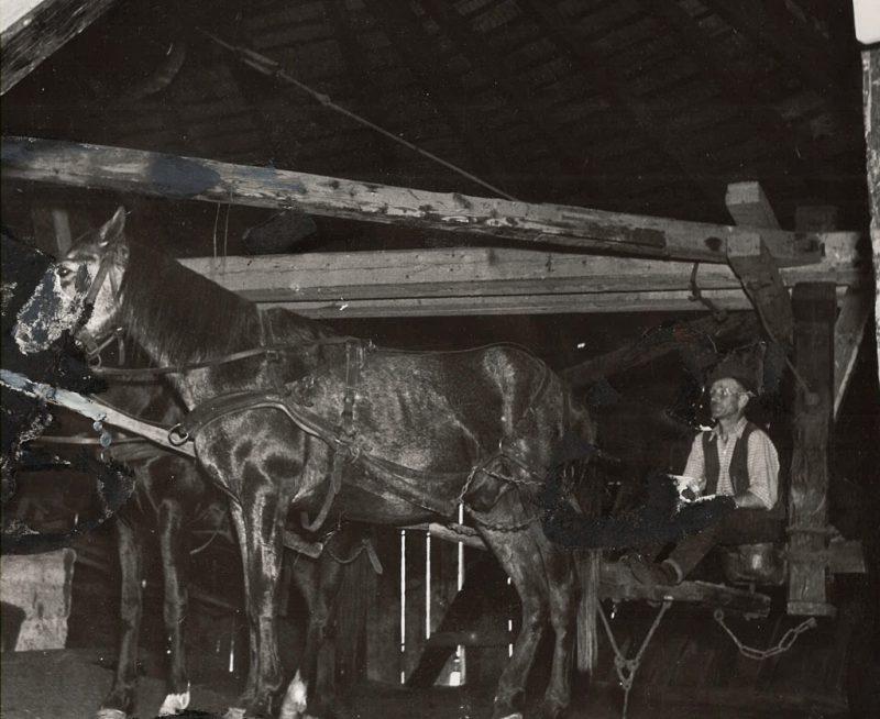 folosirea-cailor-in-mina-la-praid-imagini-arhiva