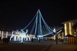 Cel mai înalt brad din România – la Cisnădie