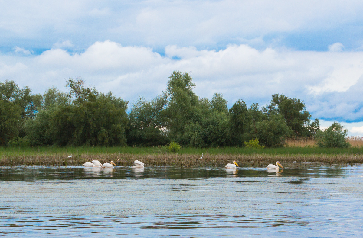 Delta Dunării, raiul de la capătul României – GALERIE FOTO