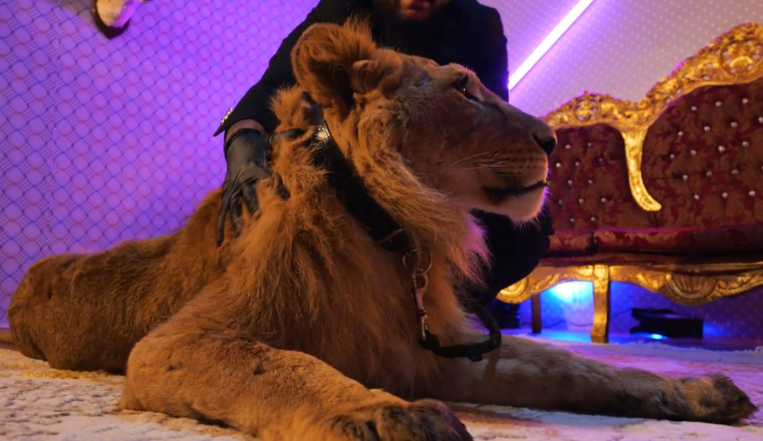 care este vederea unui leu)
